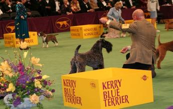 Aran- Best of Breed Westminster 2007