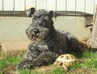 12 years old Bianca with our turtle. October 2006