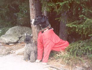 Bianca and Great Dane Rigo in High Tatras, Slovakia1997