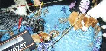Ruby at Halloween party with other pups in daycare competing in hot dog eating! 2003